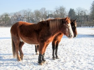 horses-in-winter-1412950-m